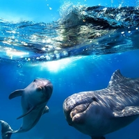 thumb_delfiny-i-more-zakazat-kiev