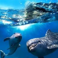 delfiny-i-more-zakazat-kiev